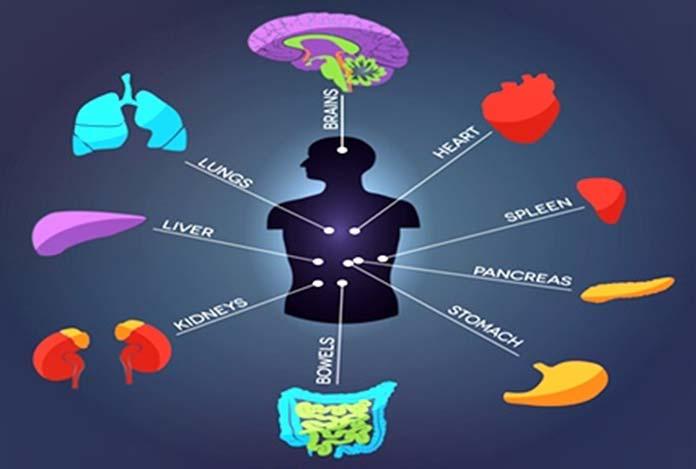 Detoxification of organs