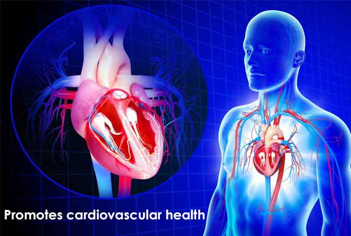 Promotes cardiovascular health CBD oil