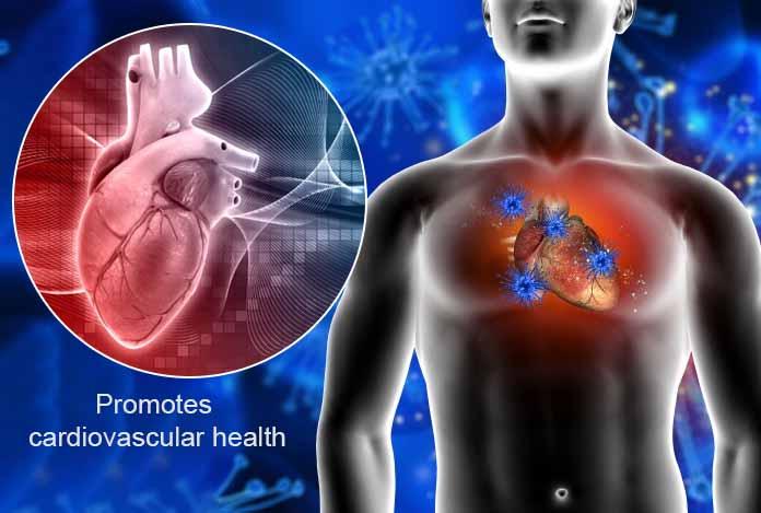 CBD hemp oil promotes cardiovascular health