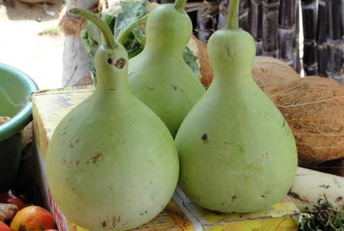 bottle gourd or calabash