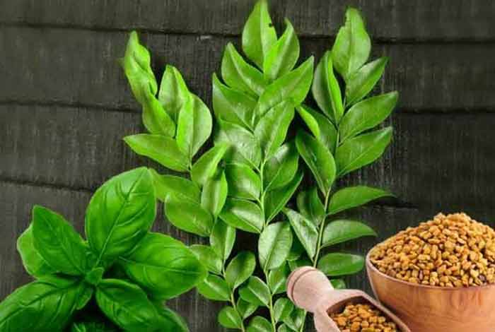 fenugreek seeds with basil and curry leaves