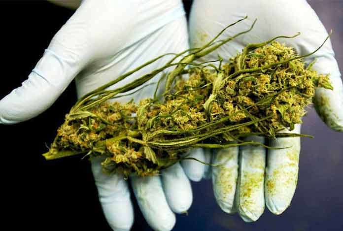 2. What Makes CBD Good for Medicinal Use