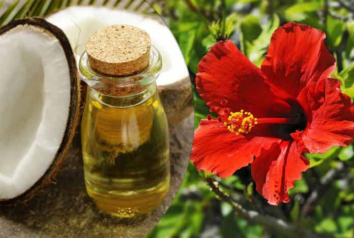 Hibiscus for Treat your damaged hair