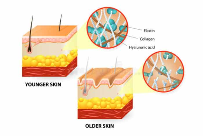 collagen as an antiaging supplement