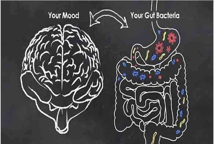 how bacteria changes the gut