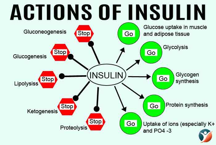 actions of insulin