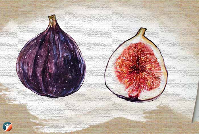 fig to-increase-penis-size