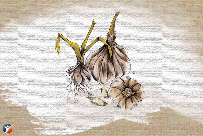 garlic-for-increasing-penis-size