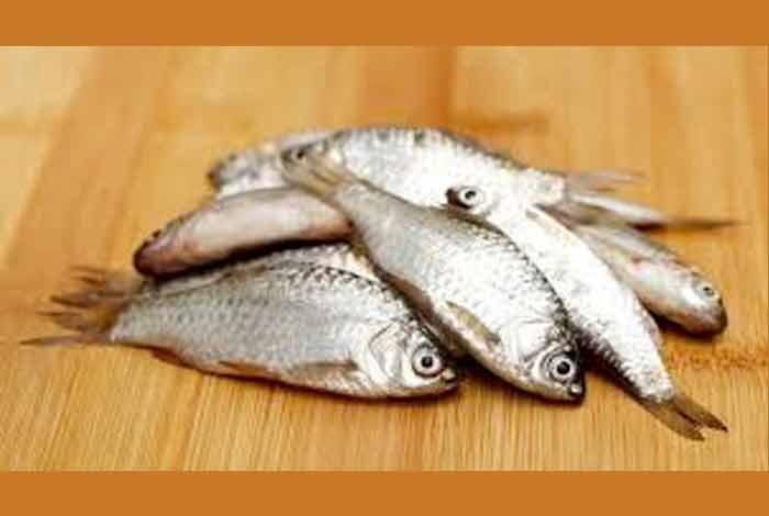 high mercury fish