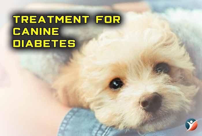 canine diabetes treatment
