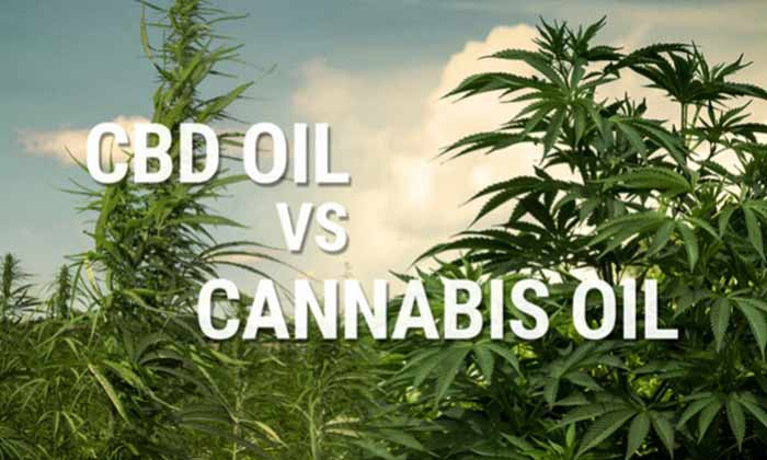 Difference Between CBD Oil and Cannabis Oil